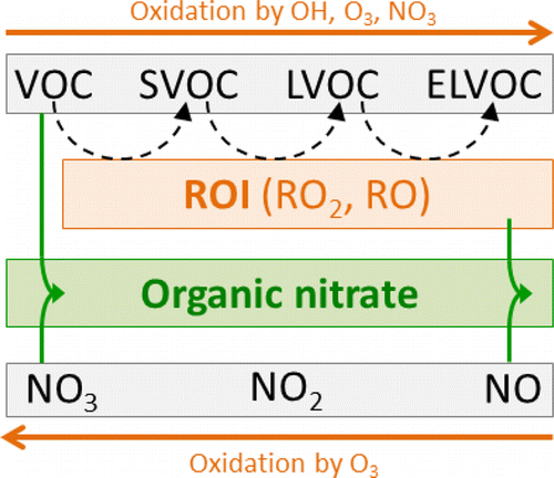The results indicate a way with which nitrogen oxides deriving from human activities may boost secondary organic aerosol production from biogenic volatile organic compounds.<br> SVOC and LVOC: volatile organic compounds. <br> LVOC and ELVOC: extremely low volatility compounds<br> ROI:  reactive oxygen intermediates <br>
