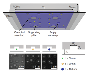 Schematic of the PDMS-based nanofluidic trapping device with integrated pockets and supporting pillars. The nanofluidic channels had a width of several micrometers and the height is a few hundred nanometers and nanopockets.  Below show the optical images of trapped nanoparticles.
