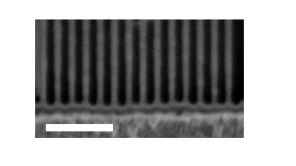 Suspended silicon nanowires fabricated using EUV interference lithography.