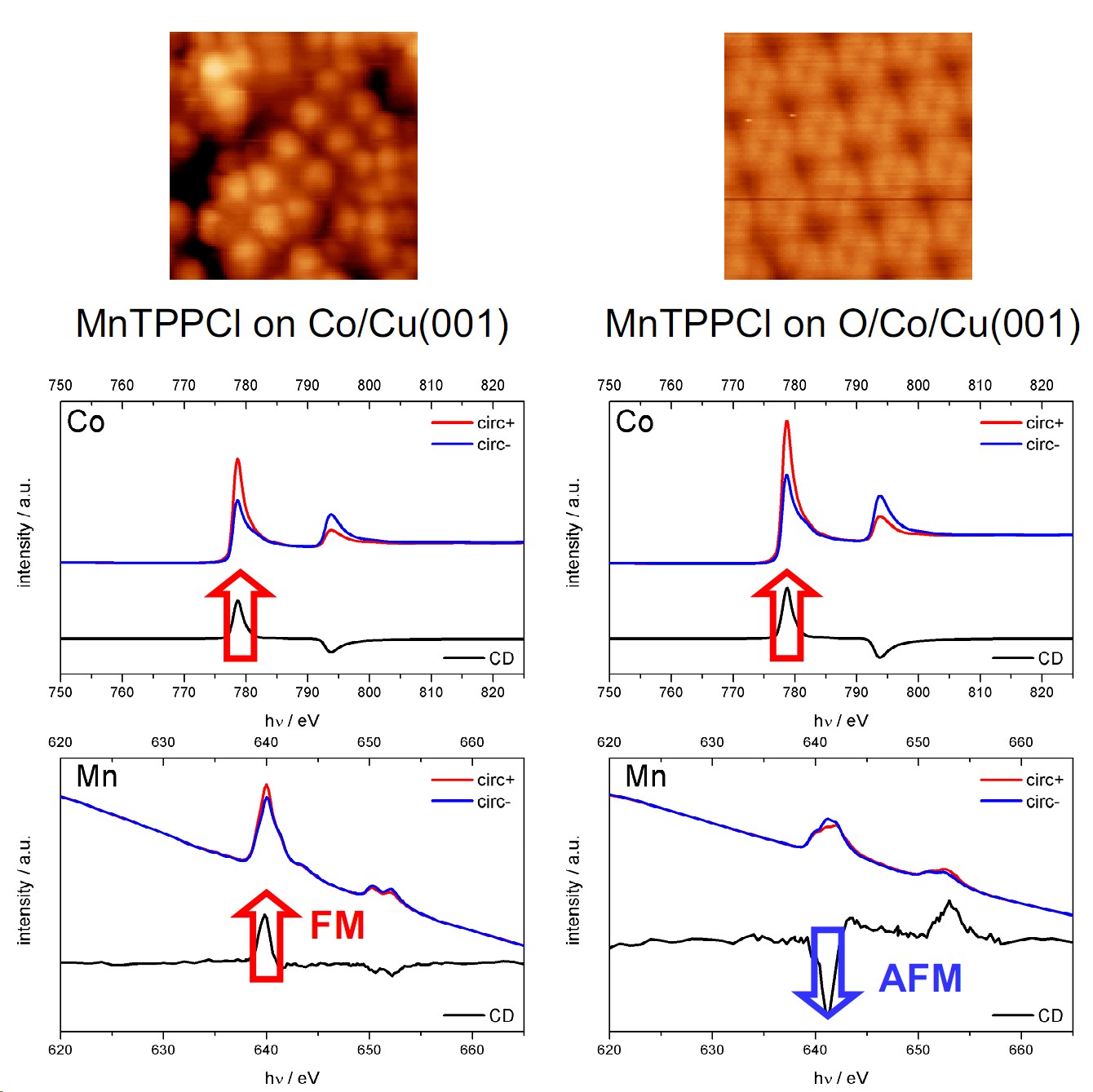 Fig.1 STM (top) and XAS/XMCD (bottom) data of MnTPPCl (Mn tetraphenylporphyrin chloride) sublimed onto Co (left) and onto oxygen-reconstructed Co (right). In case of MnTPPCl on Co, the XMCD evidences a ferromagnetic coupling between the substrate (Co) and the Mn in the molecule. MnTPPCl on O/Co however, is antiferromagnetically coupled to the substrate.