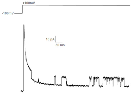 Current peaks of about 12 pA from single KvAP ion channels reconstituted in a DOPG/DOPE bilayer