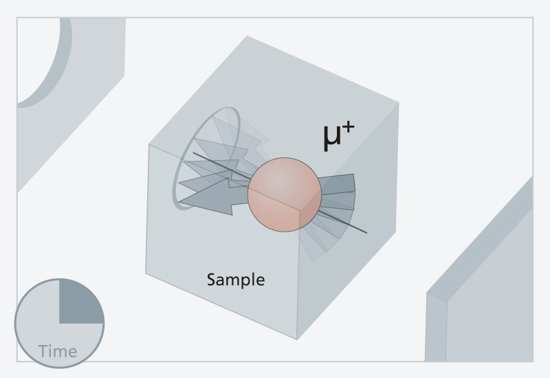 2. The muon's rotational axis precesses around the direction of the magnetic field in the sample.