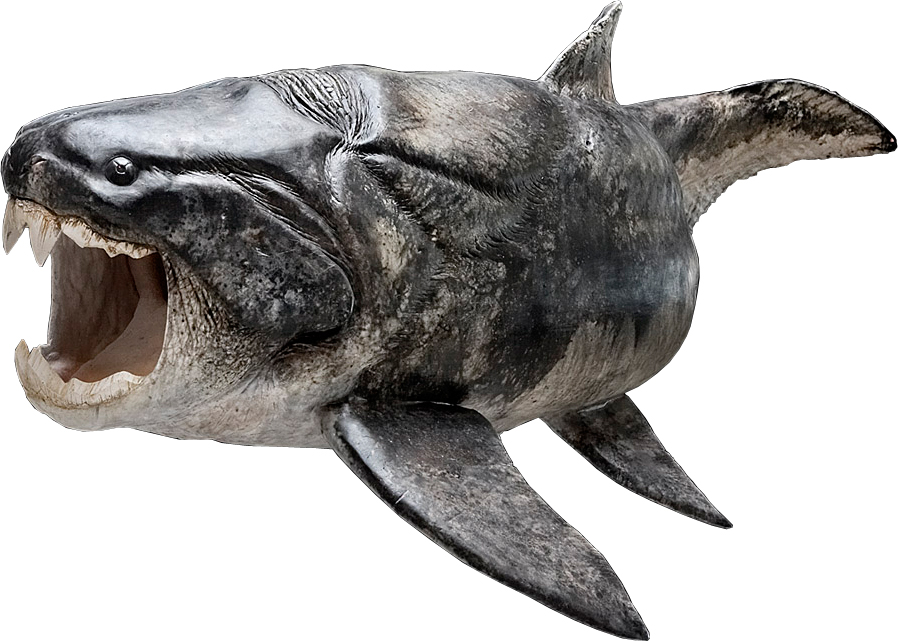 Sculptured reconstruction of the placoderm Dunkleosteus (Esben Horn, <a href=http://10tons.dk/ >10tons</a>; supervised by Martin Rücklin, John Long and Philippe Janvier)<br>All images are for single use only to illustrate this press release and are not to be archived.  Please credit the copyright holder.