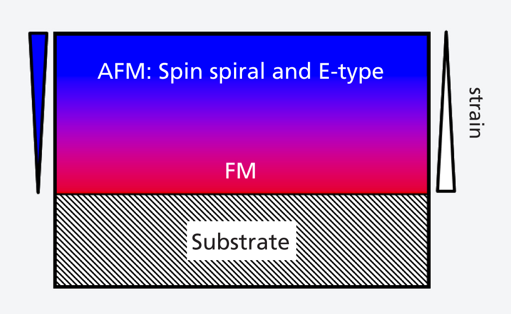 Diagram of the processes in the LuMnO<sub>3</sub> layers studied. The layer is especially strained close to the substrate, which leads to a ferromagnetic order there. As the distance grows, the strain decreases so that two antiferromagnetic orders appear: the spin spirals and the E-type, where two spins point in one direction and the next two in the other.