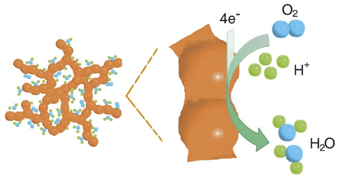 Schematic representation of the oxygen reduction reaction at the positive electrode of a low-temperature polymer electrolyte fuel cell. Each oxygen atom from the oxygen molecules fed into the cell captures two electrons, which is followed by the reaction with hydrogen nuclei to form water. Copyright Wiley-VCH Verlag GmbH & Co. KGaA. Reproduced with permission.