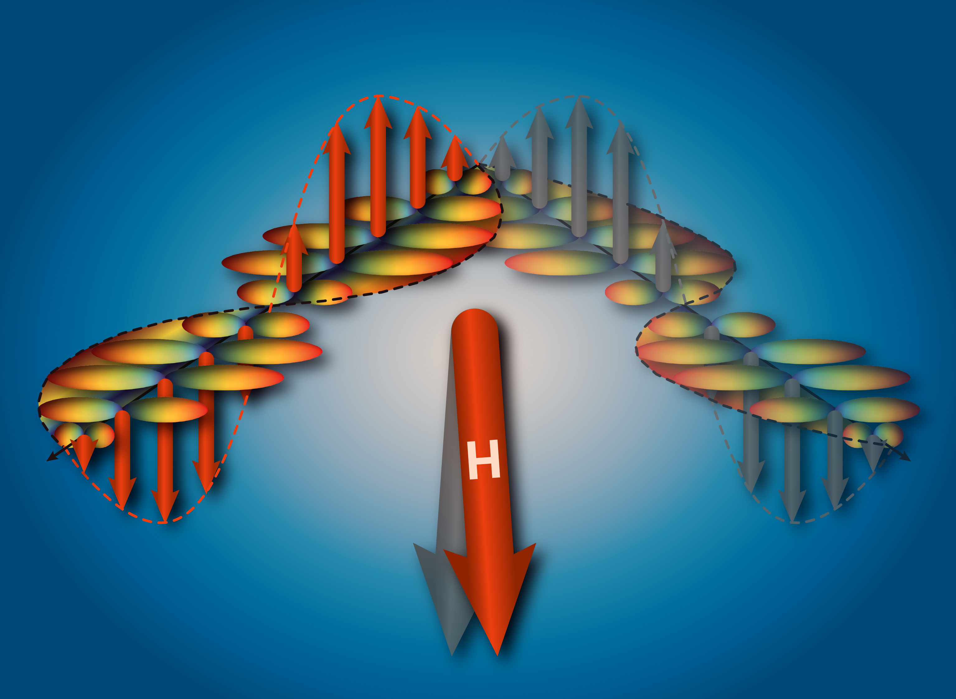 Depending on the orientation of the magnetic field (H), the triggered spin density wave (red arrows or grey arrows) can move in different directions. The superconductivity, which is generated at the same time, is modulated by the spin density wave (Illustration: Paul Scherrer Institute/Simon Gerber).