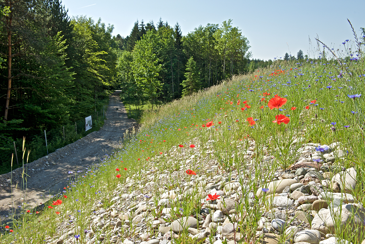 Spring meadow at SwissFEL (June 2015). Under the embankment, almost imperceptibly, the facility is being built up. (Photo: Paul Scherrer Institute/Markus Fischer)