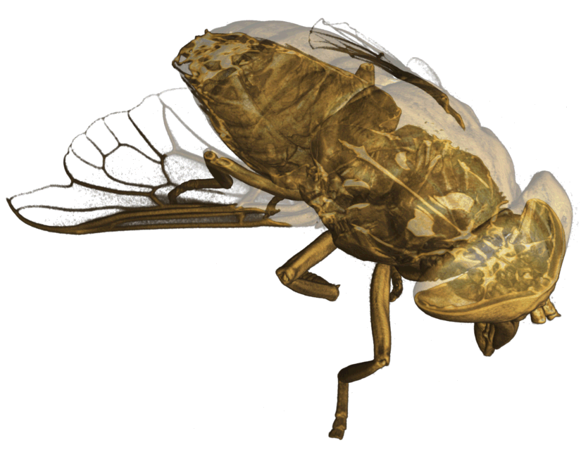 Figure 13: Visualization of 3D neutron tomography data of a horsefly