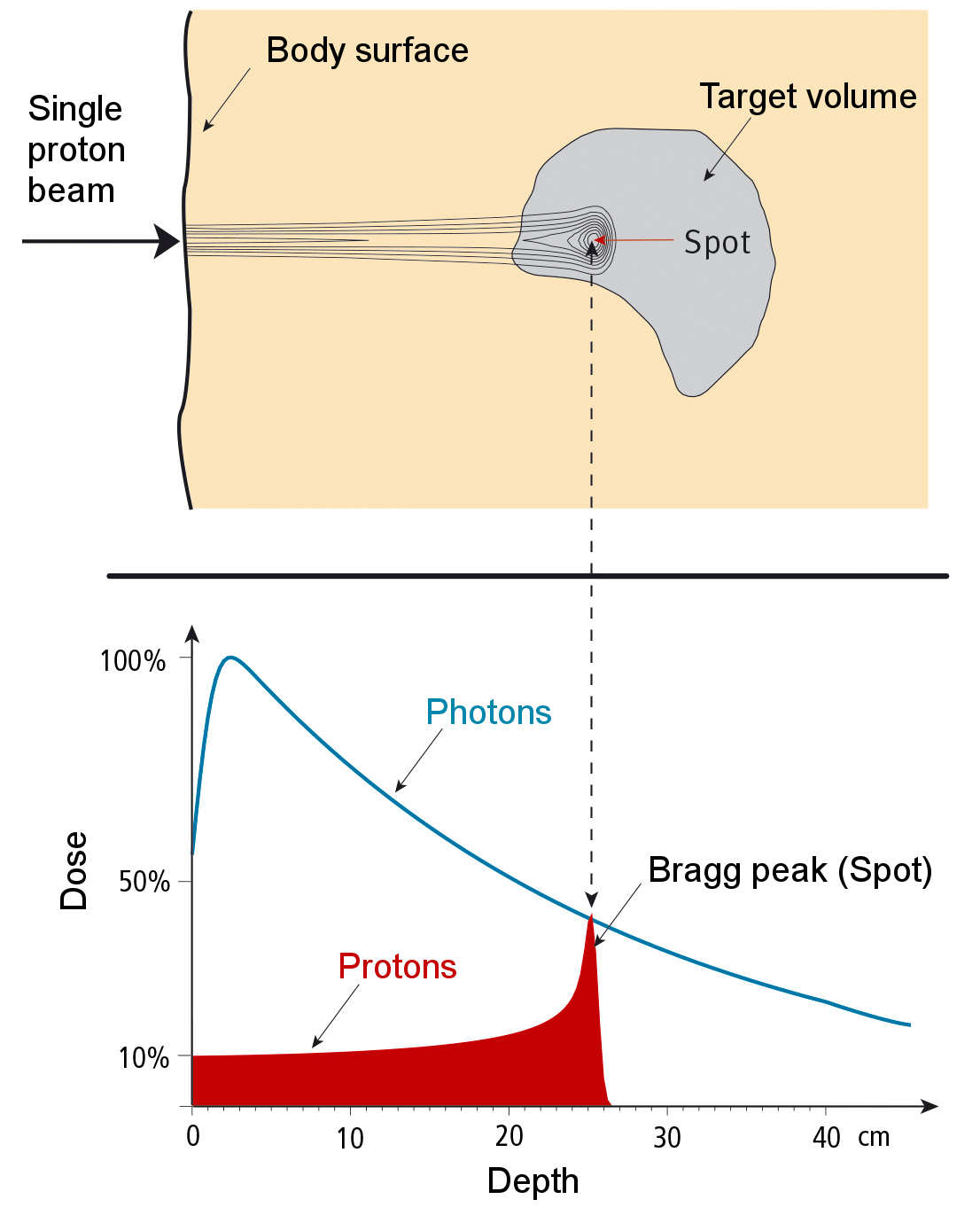 Radiation dose of a proton pencil beam as a function of depth of tissue. The range of this proton beam is 25 cm. In the top panel the dose distribution is shown. In the bottom panel the dose deposited by a proton beam in comparison with that of a photon beam is shown.