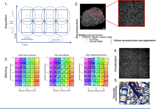 A schematic overview of the project: from image acquisition to processing of TB-sized dataset of the mouse brain.
