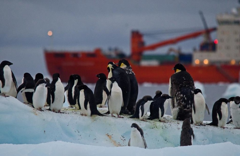 Penguins and the ice breaker (by Joshua Lawrence)