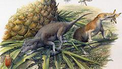 Côté menu, les premiers mammifères avaient déjà leurs