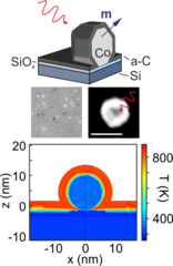 Single femtosecond laser pulse excitation of individual cobalt  nanoparticles