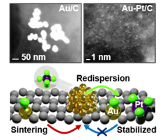 Platinum chloride in aqueous solution promotes the dispersion of large gold nanoparticles (>70 nm) on carbon