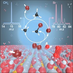 Methyl radicals and bromine atoms were detected in the gas phase revealing the interplay of surface-catalyzed and gas-phase reactions in the catalytic oxybromination of methane.