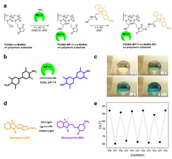 (a) Strategy for orthogonal functionalization of polymer brushes using specific amine-apoxide and thiol-ene coupling reactions. (b,c) Demonstration of the enzymatic activity  and (d,e) of the UV-light induced change in wettability.