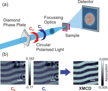 (a) The dichroic ptychography setup. A diamond phase plate converts linearly polarized light into CL or CR light, which is then focused close to the sample plane. A piezoelectric stage is used to scan the sample across the beam. (b) The absorption part of reconstructed images taken with CL and CR polarized light at the Gd L3 edge with a photon energy of 7.2445 keV, which contain both electron density and magnetic contributions. The difference of these images removes the electron density contrast of Pt refe…
