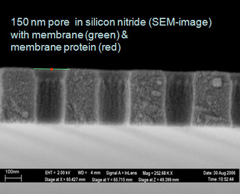 Suspended bilayer in a nanopore
