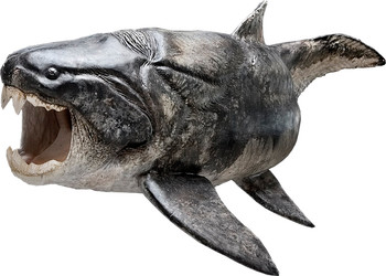 Sculptured reconstruction of the placoderm Dunkleosteus (Esben Horn, 10tons; supervised by Martin Rücklin, John Long and Philippe Janvier)All images are for single use only to illustrate this press release and are not to be archived.  Please credit the copyright holder.