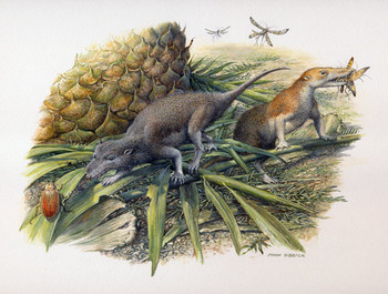 The Early Jurassic basal mammals, Morganucodon and Kuehneotherium, hunting their prey on the small island they shared in what is now Glamorgan, southern Wales.  Image by John Sibbick (www.johnsibbick.com) Copyright: Pamela Gill