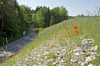 On top of the SwissFEL: The research facility is hidden under the sloping hillside and not visible from the forest path. On the hillside ecologically valuable rough grassland has been planted. (Photo: Paul Scherrer Institute/Markus Fischer)